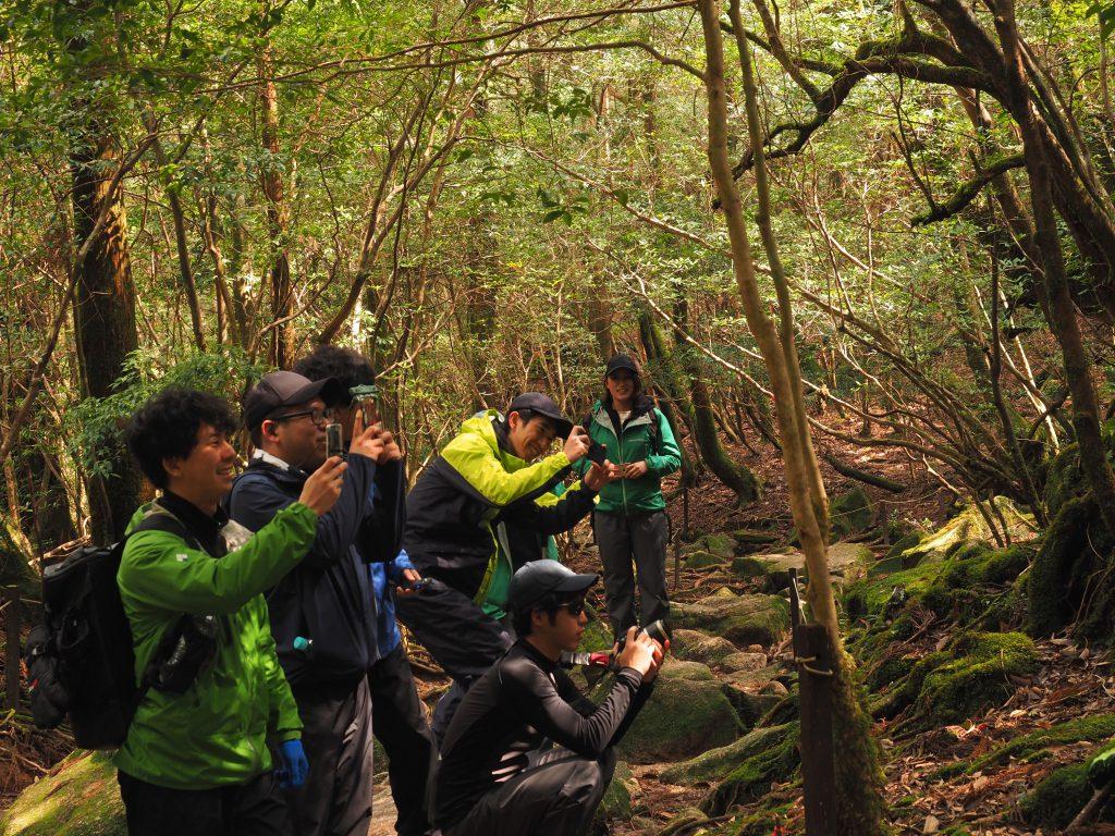 白谷雲水峡の苔の世界