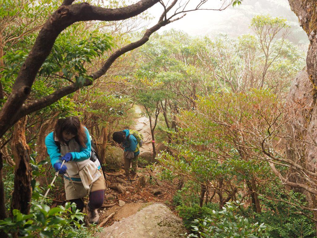 太忠岳コースの急登を登る