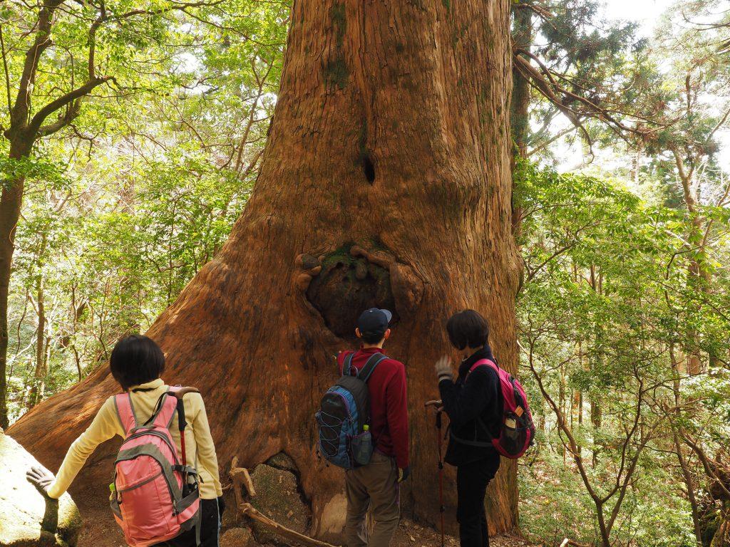縄文杉コースの屋久杉と記念撮影