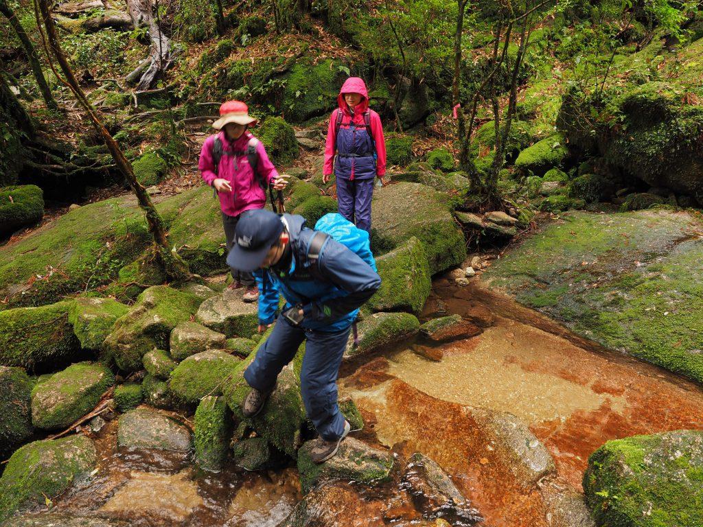 白谷雲水峡の奉行杉コースを進む