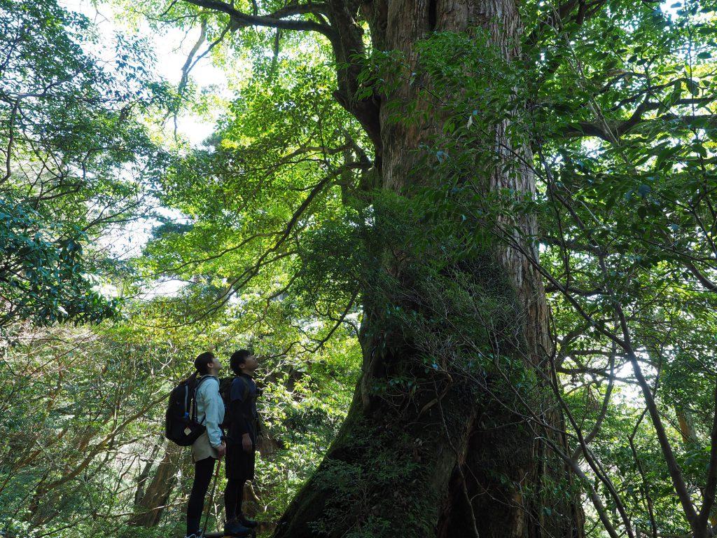 屋久杉の森