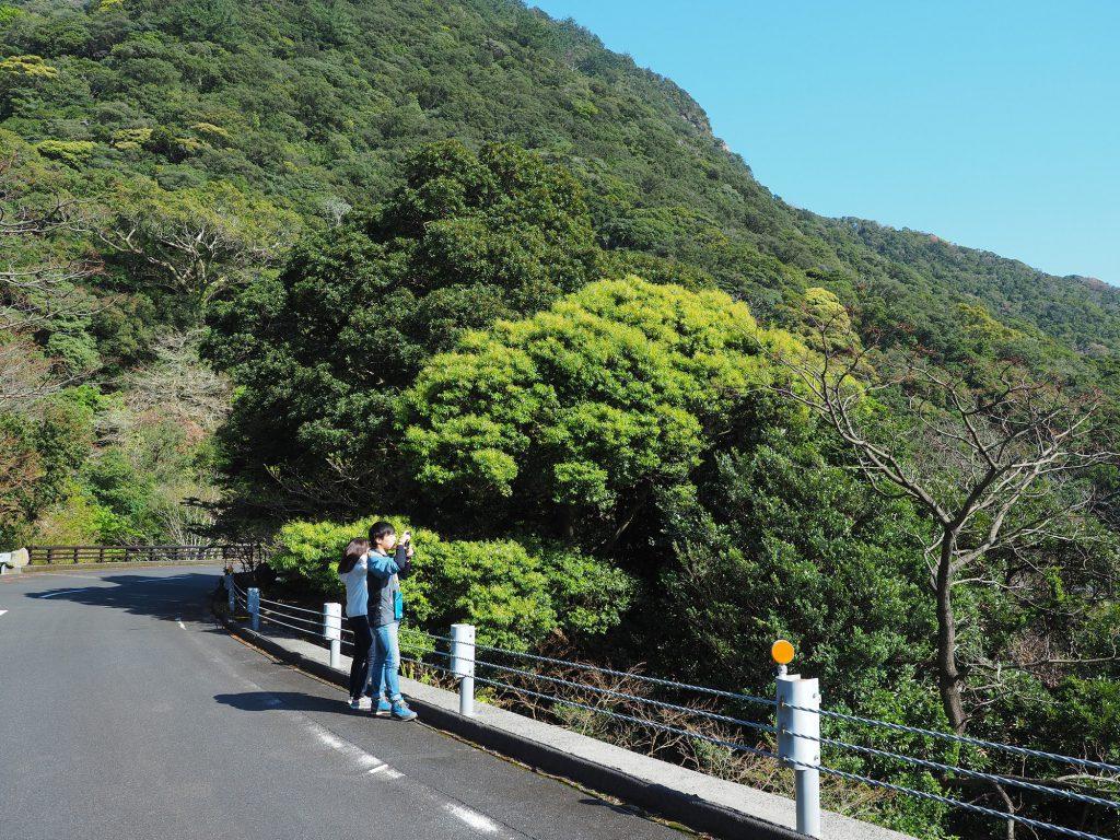 照葉樹の新緑