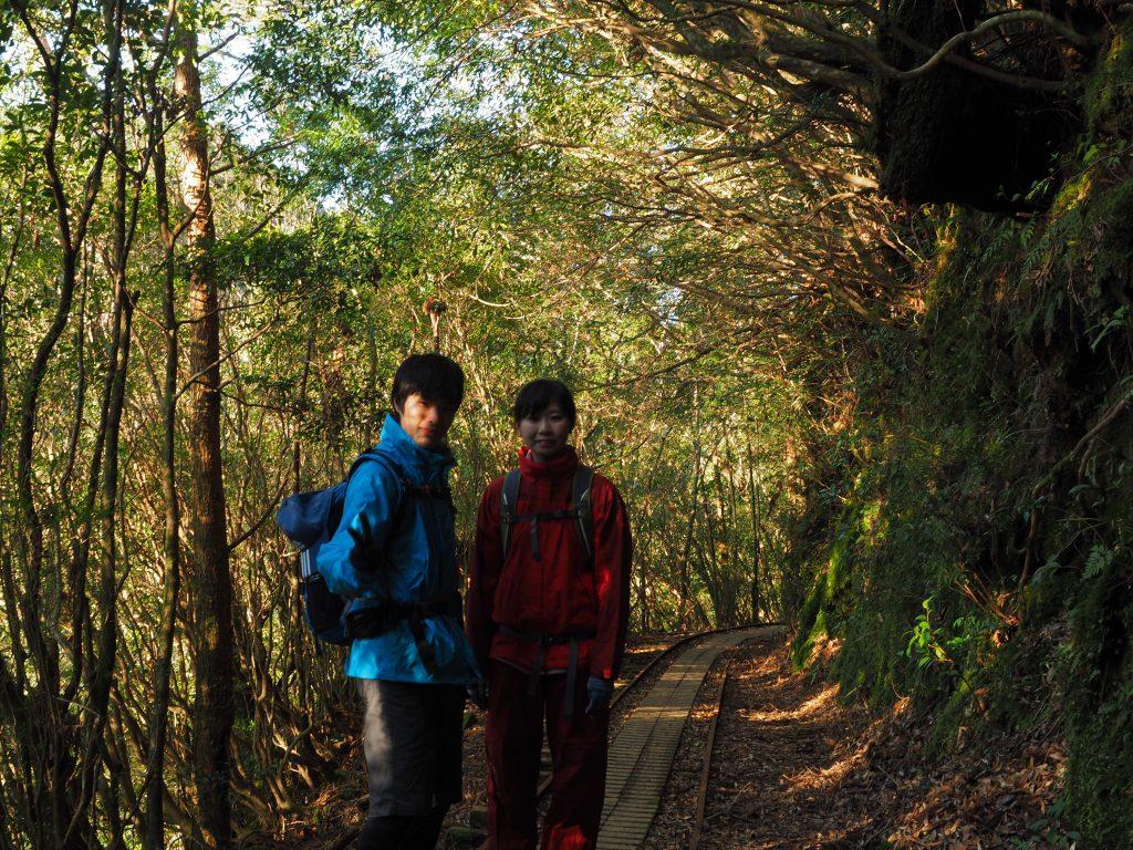 縄文杉コースのトロッコ道