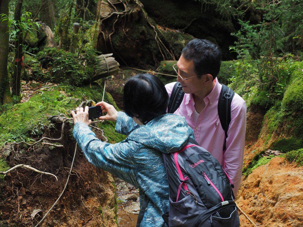 白谷雲水峡の小さな杉を撮影