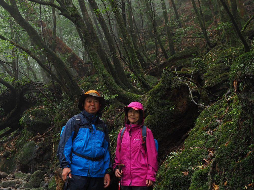 白谷雲水峡の楠川歩道の森