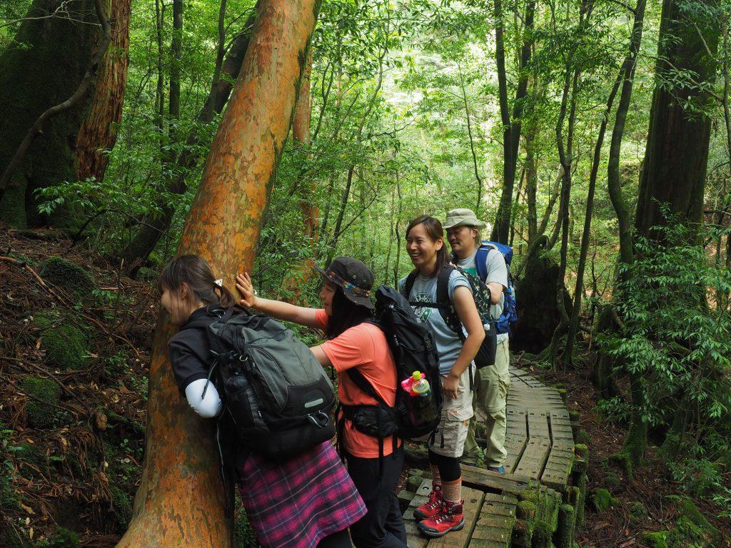 縄文杉コースのヒメシャラ