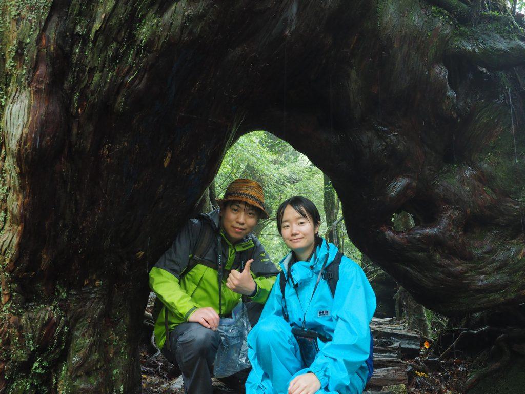 白谷雲水峡のくぐり杉