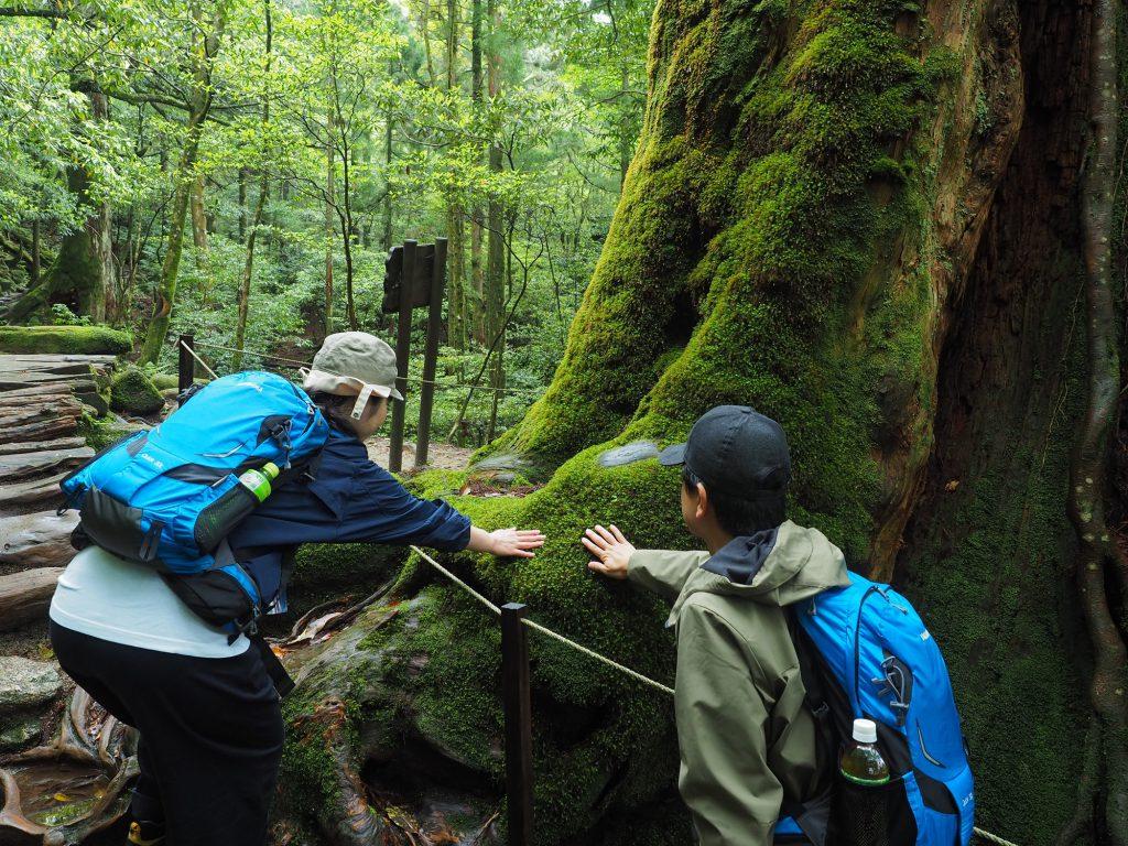 白谷雲水峡の七本杉