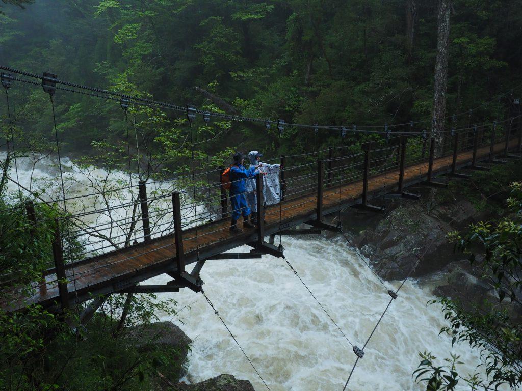 ヤクスギランドの吊り橋
