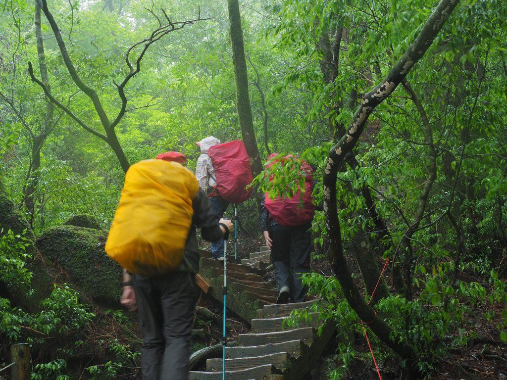 縄文杉に向けて階段を上る