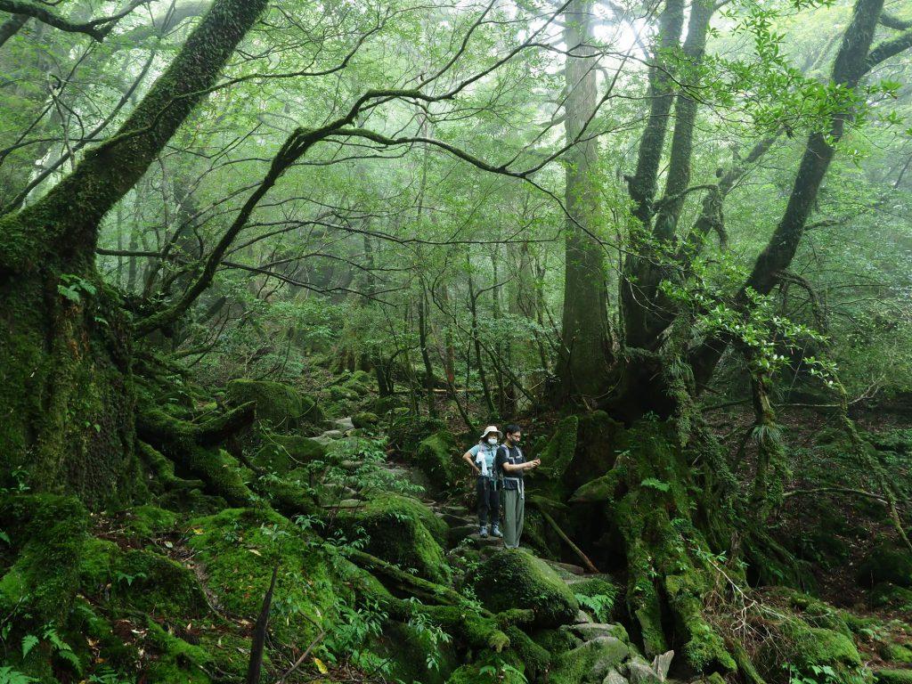 霧がかかった森