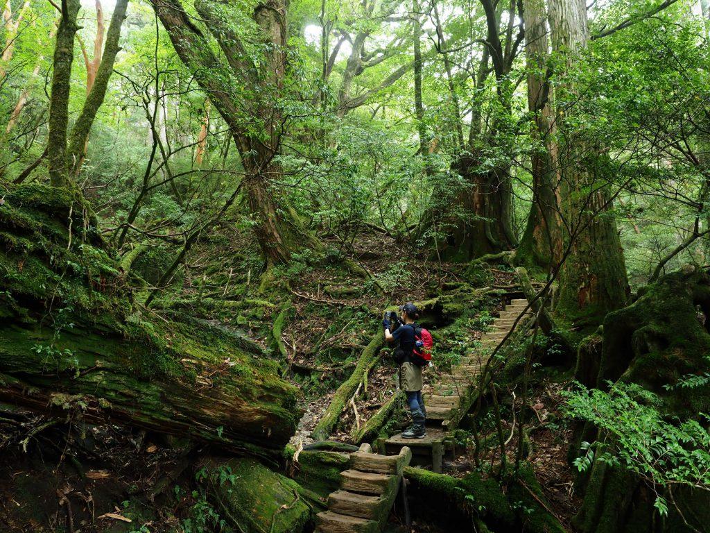 苔が多い登山道