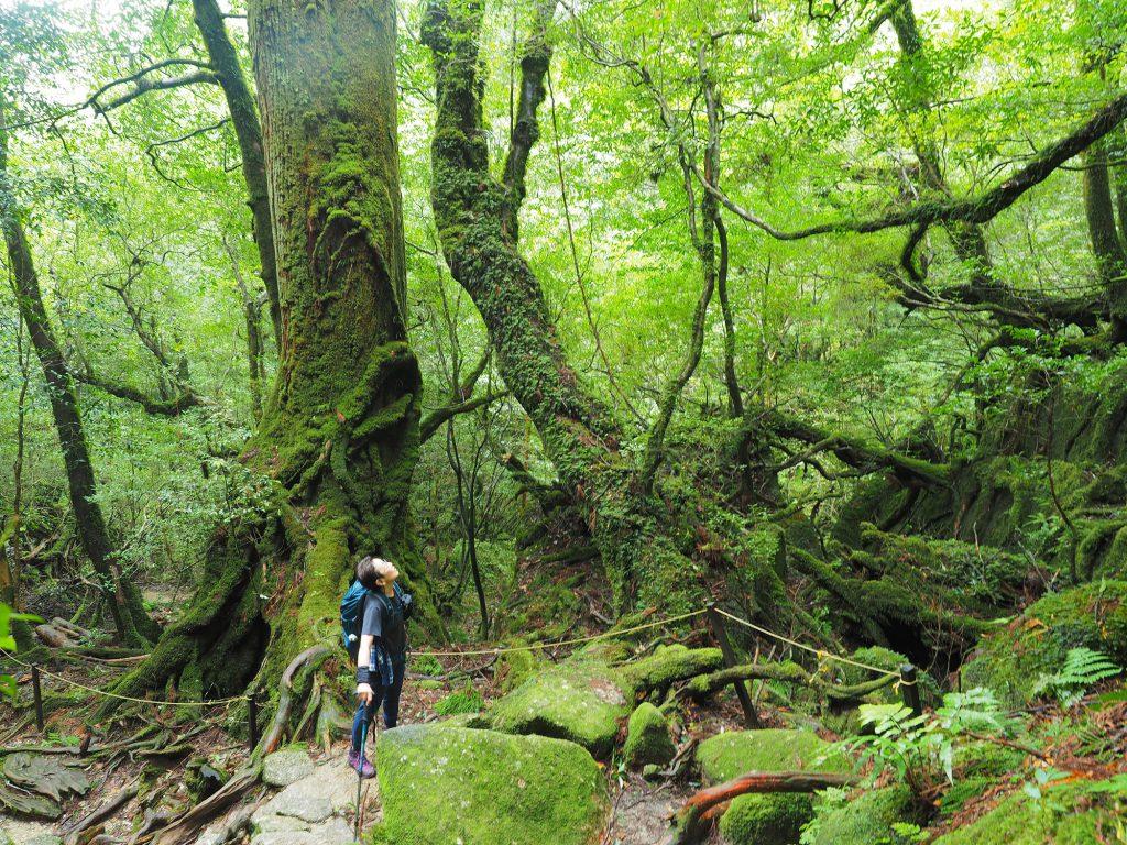 楠川歩道の苔むした森