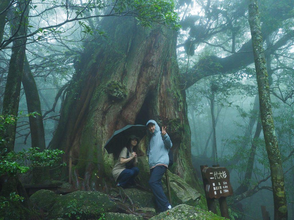 白谷雲水峡の二代大杉