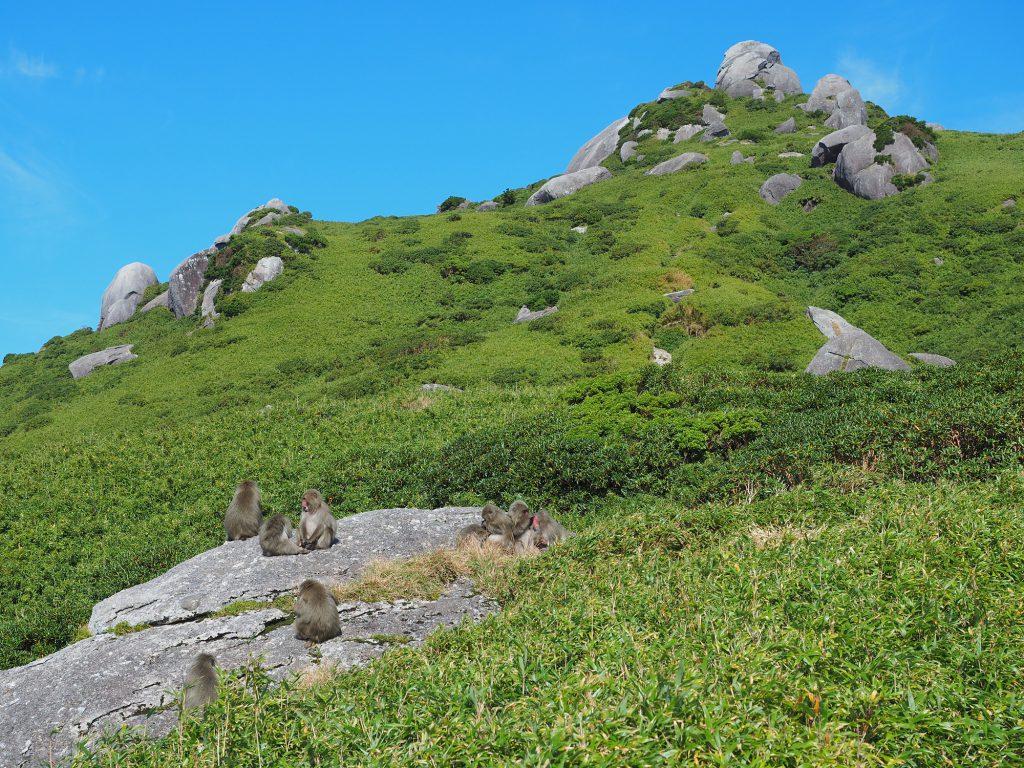 栗生岳とヤクザル