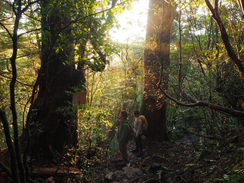 淀川登山口近くの森