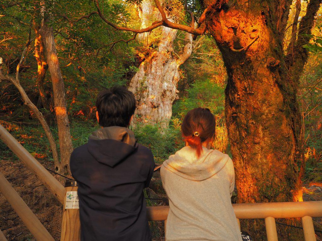 朝日と縄文杉