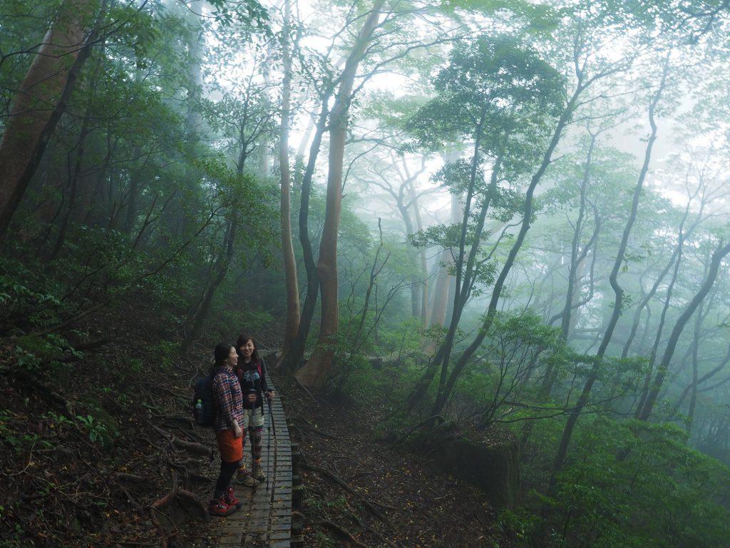 登山道が霧の中