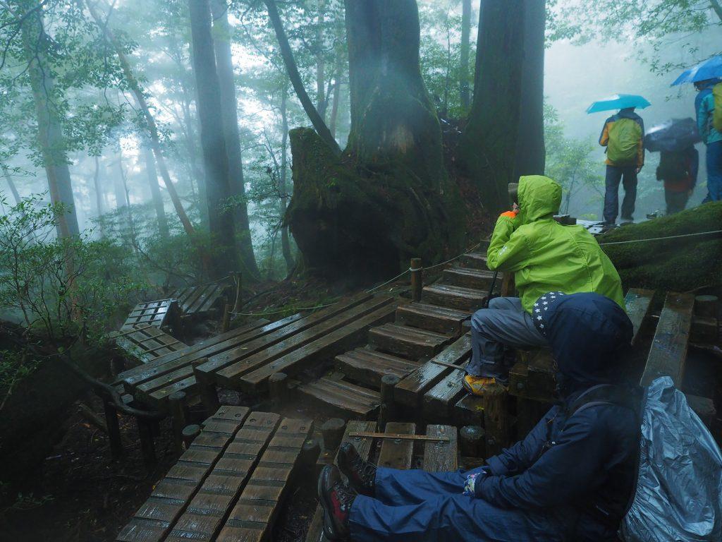 屋久杉の切り株の前で休憩