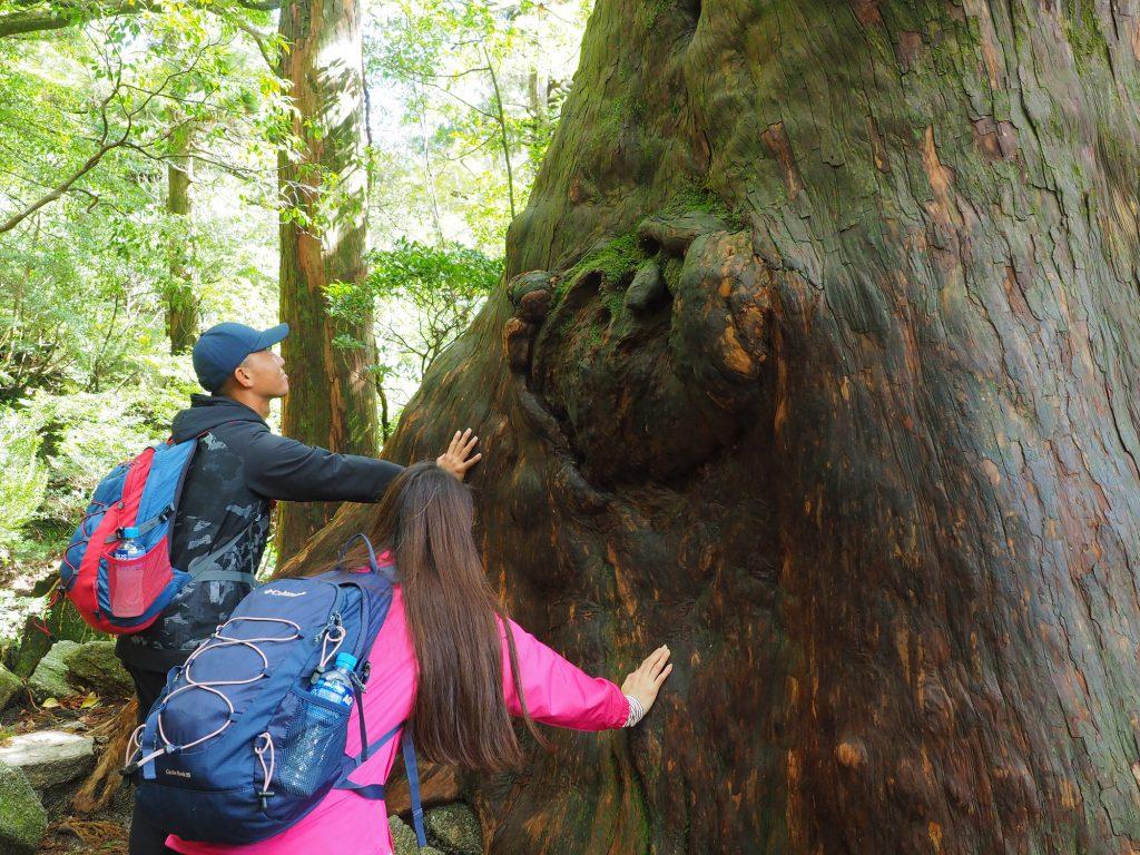 大きな屋久杉