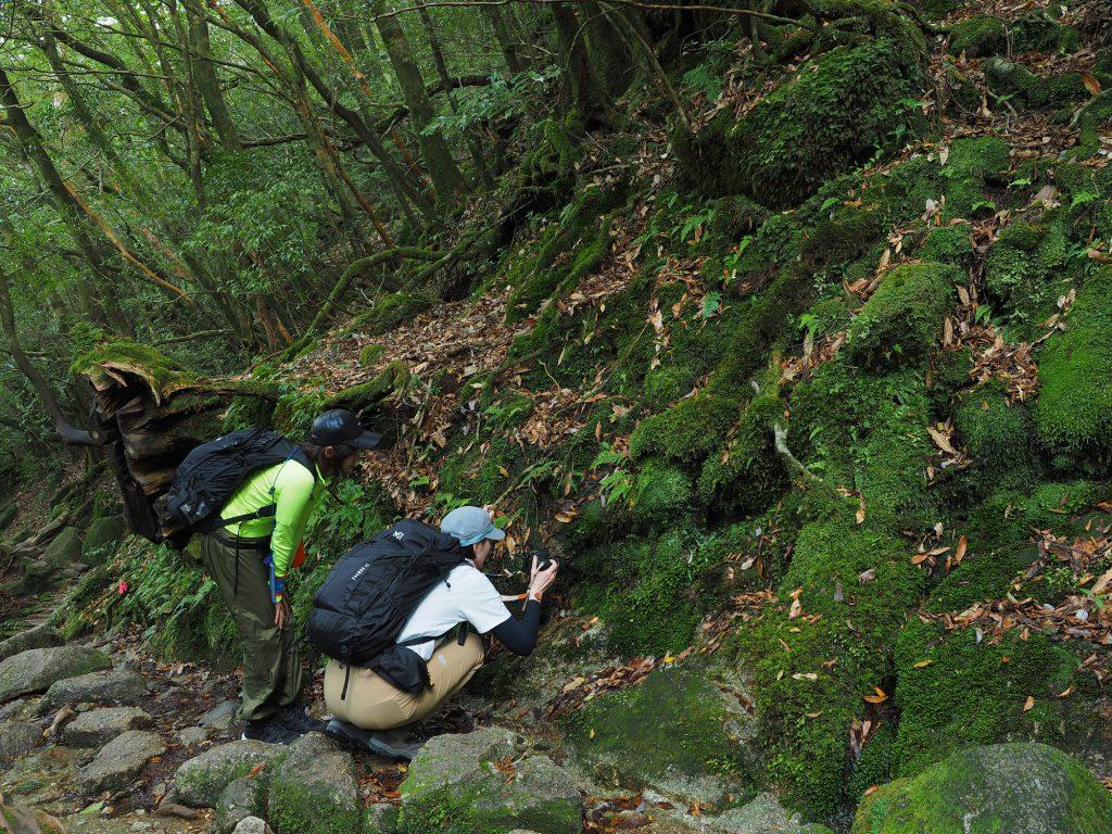 苔を写真撮影