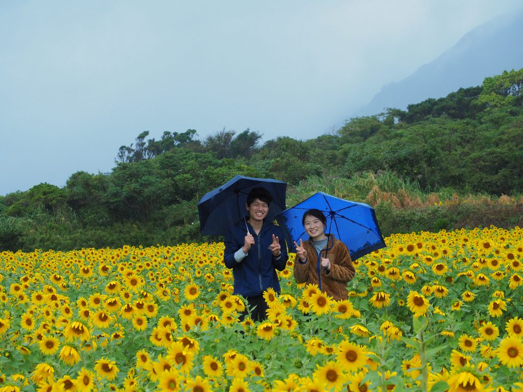 屋久島のひまわり畑