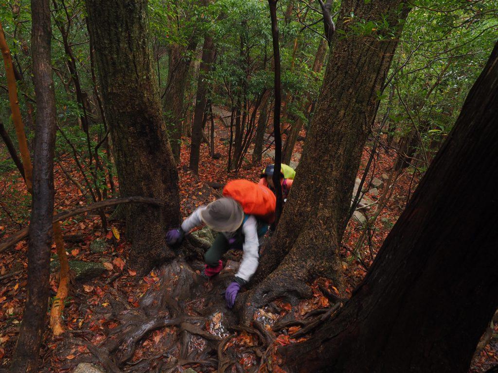 縄文杉コースの急な階段