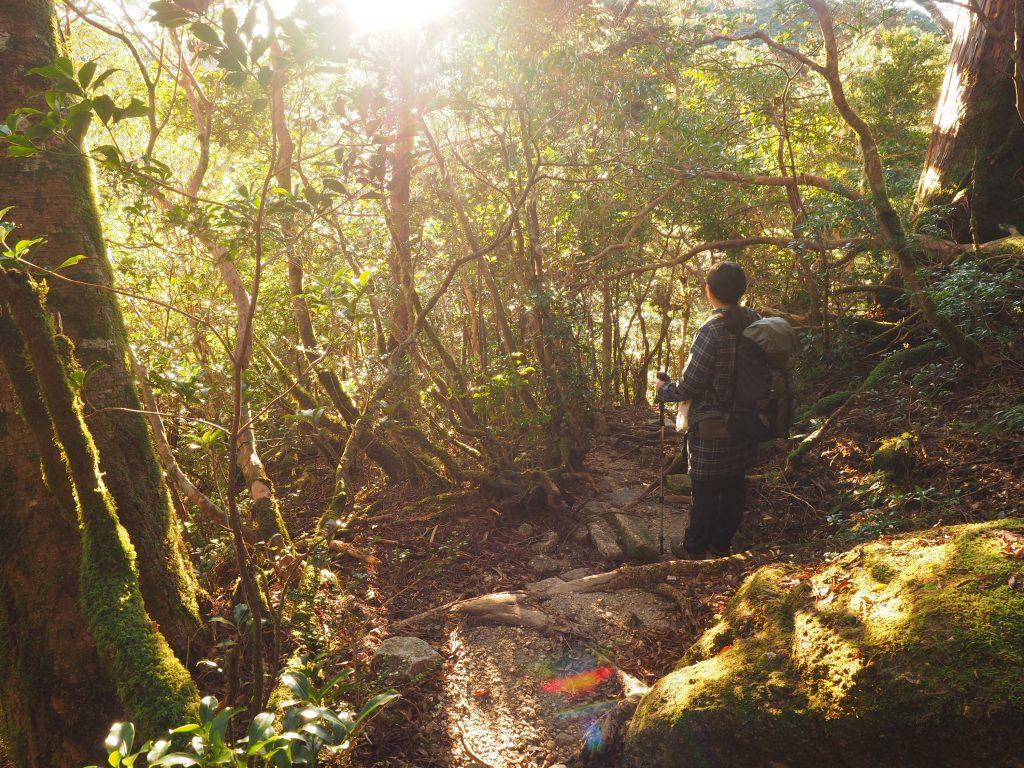 淀川小屋近くの森