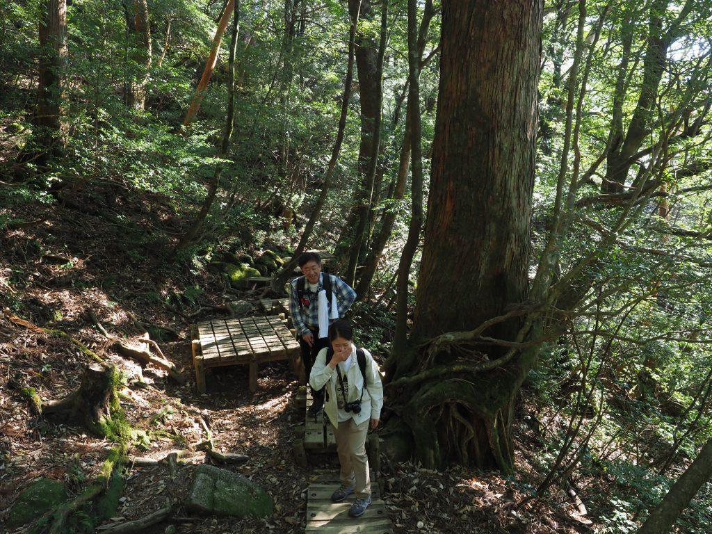 屋久杉の横で記念撮影