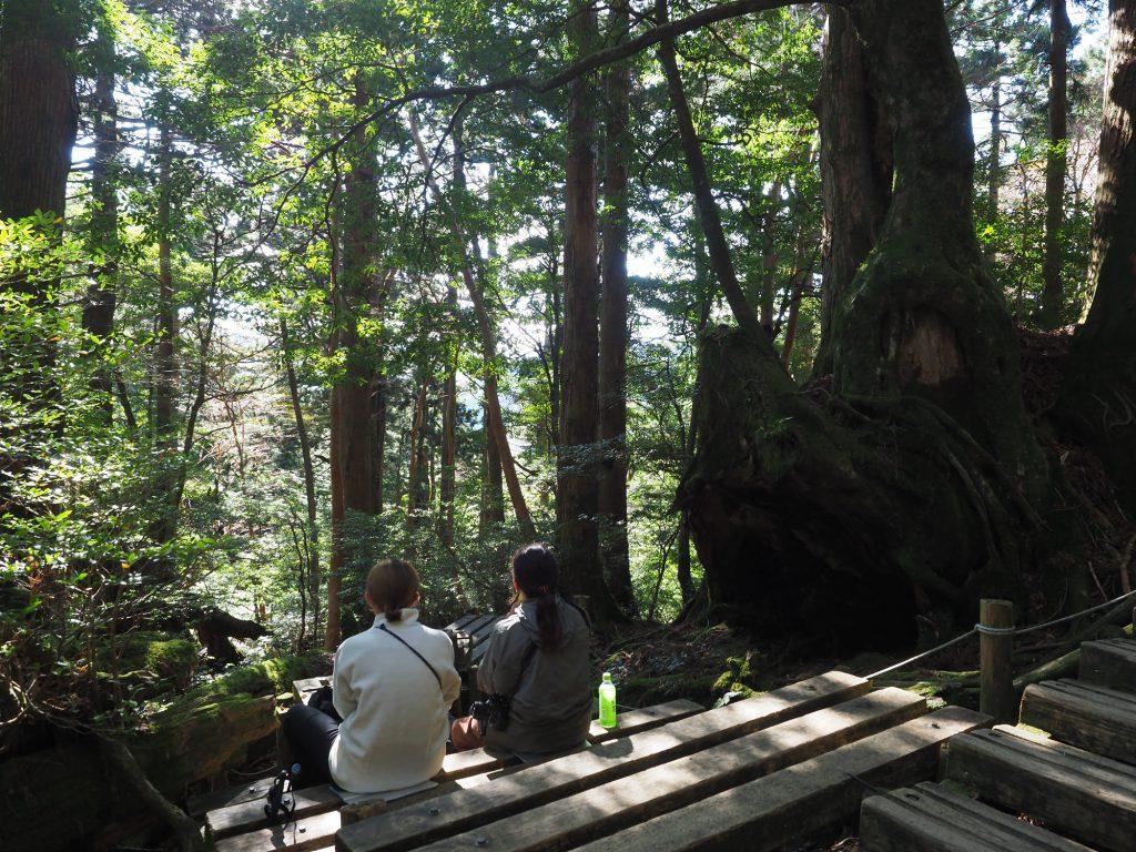 屋久杉の切り株の横で休憩