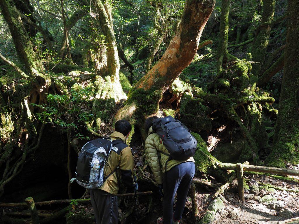 苔むす森で苔を観察