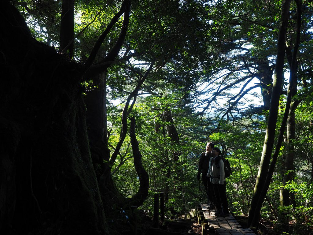縄文杉までの登山道