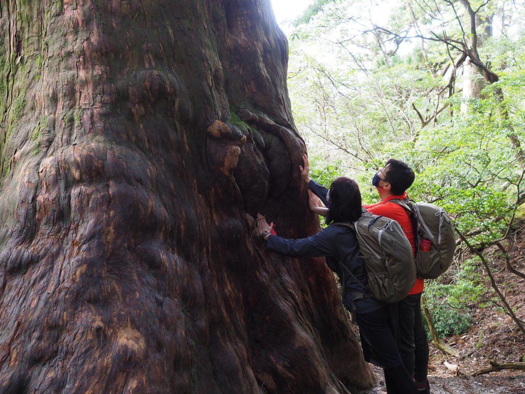 屋久杉と記念撮影